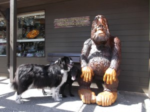 Dogs and Sasquatch